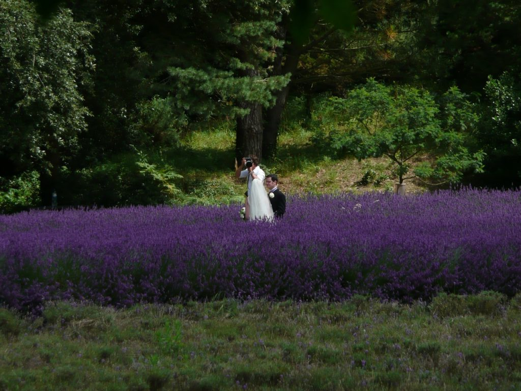 fotograf i kamerzysta na wesele